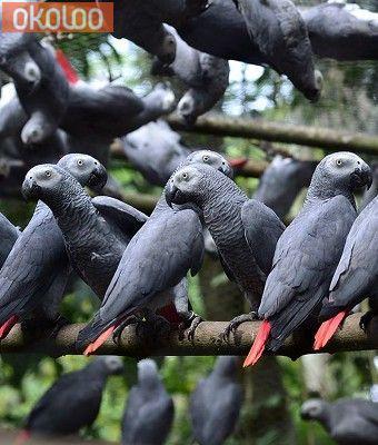 Pets Fresh Fertile Parrots Eggs And Babies Parrots For Sale